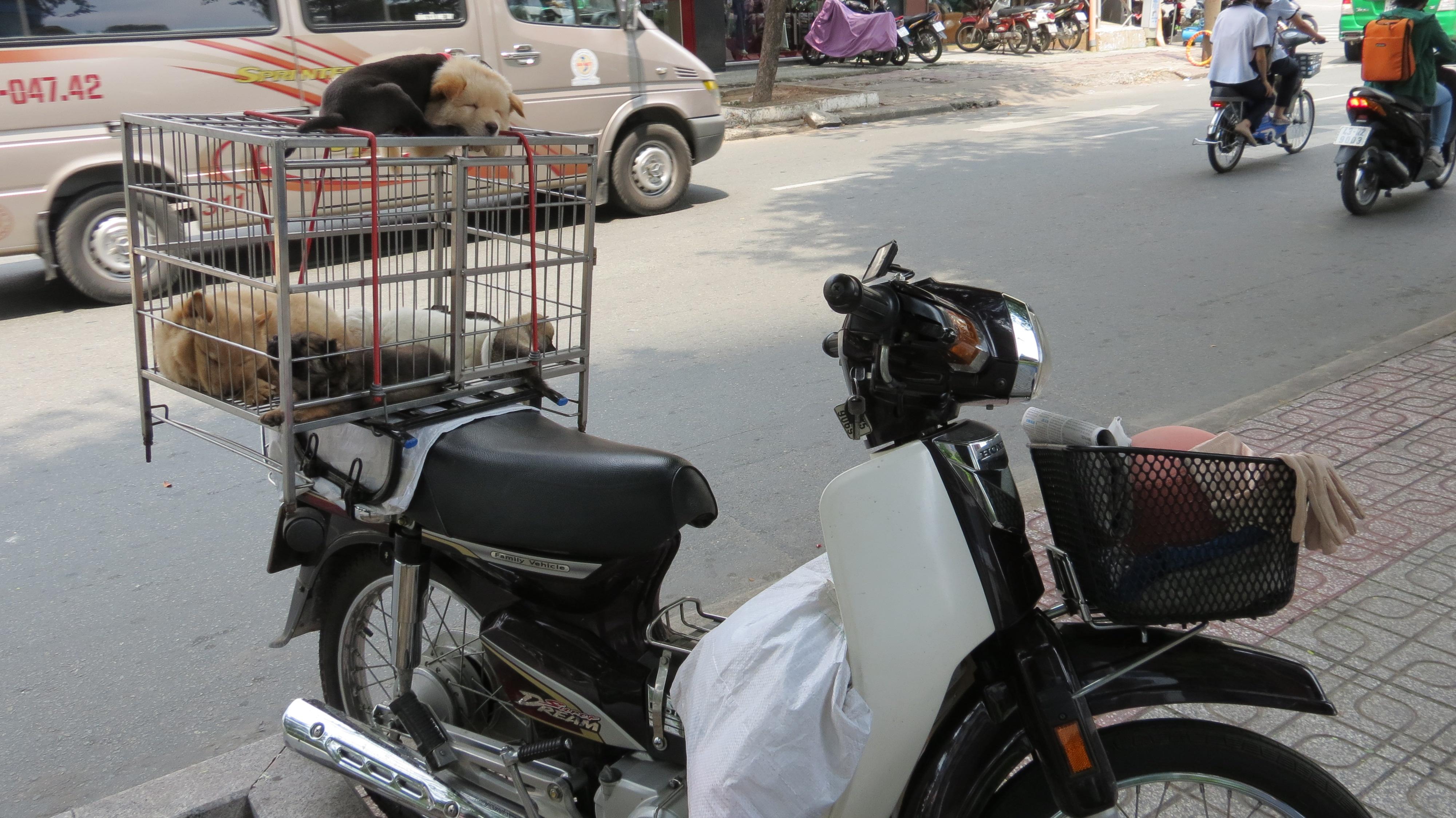Miyouinvietnam - Combien de temps pour qu un noyer donne des noix ...